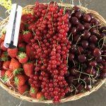 Obstkorb für Büros